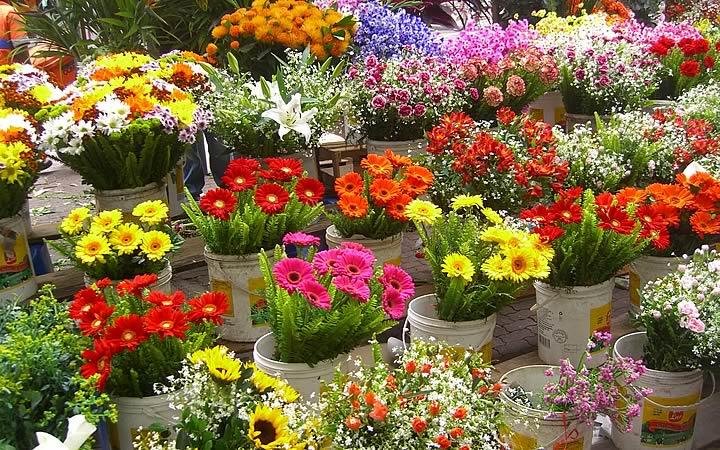 Vaso de plantas com flores no Cadeg