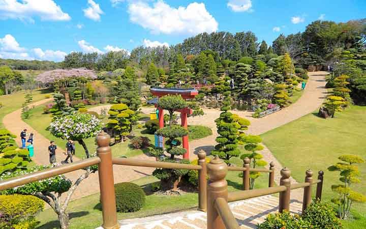 Jardim Japonês e Árvore Gigante