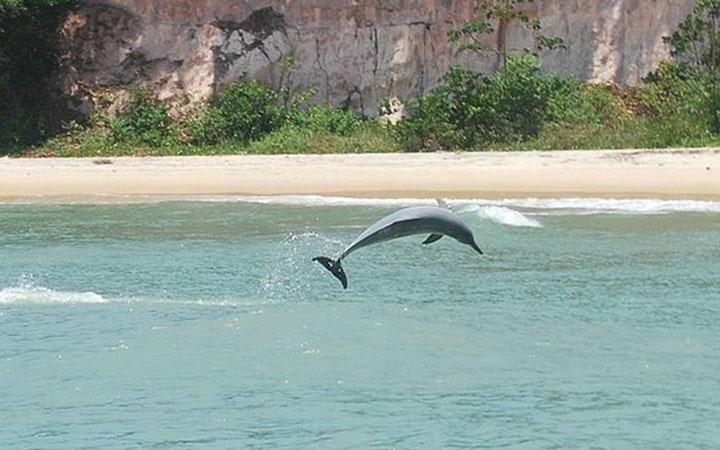 Baía dos Golfinhos - Golfinho pulando - Tibau do Sul