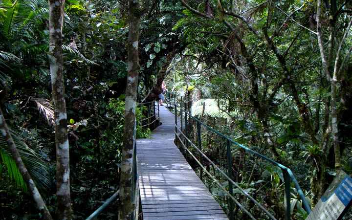 Trilha em Madeira Parque Nacional da Serra dos Órgãos