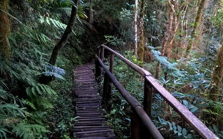 Trilha em ponte de madeira parque