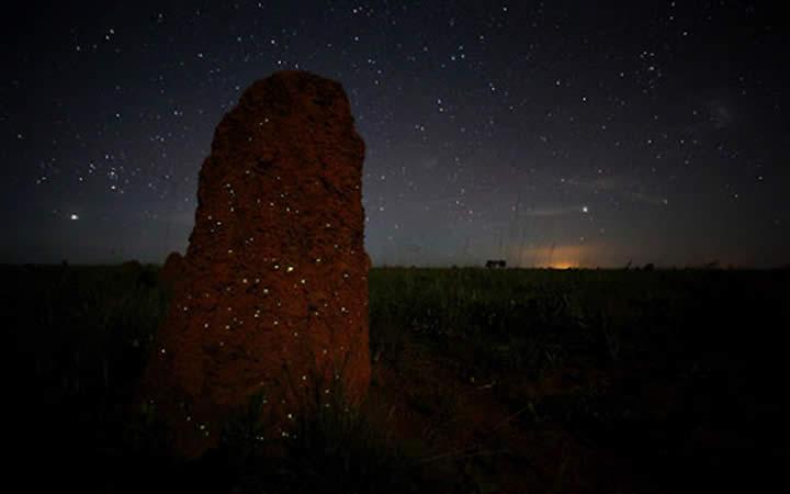 Bioluminescência - Parque Nacional das Emas