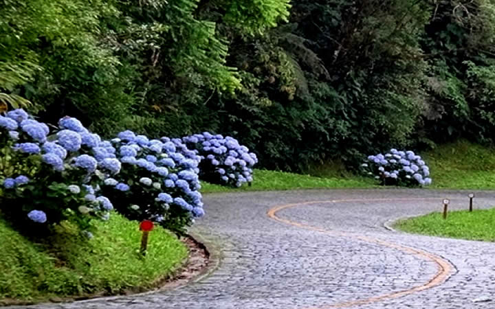 Estrada com Pedras e Hortênsias