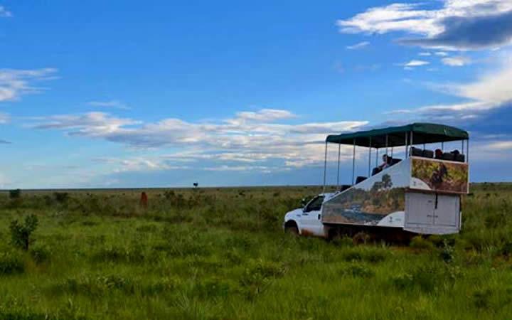 Safari de Carro - Parque Nacional das Emas