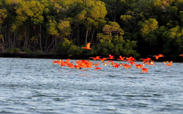 Pássaros voando sobre água