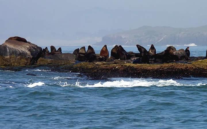 Ilha dos Lobos - Torres RS