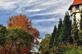 Rota Romântica Estrada e Vegetação